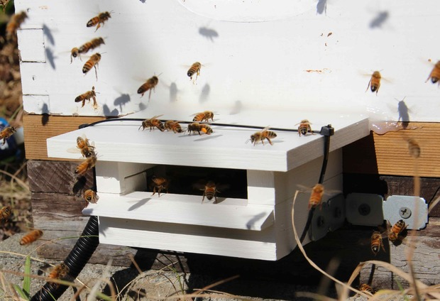 A beehive set up to monitor the movement of bees.