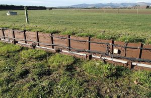 These lysimeters (marked by circles of vigorous plant growth) are in situ in a paddock