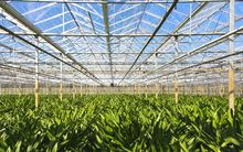 Greenhouse horticulture generic