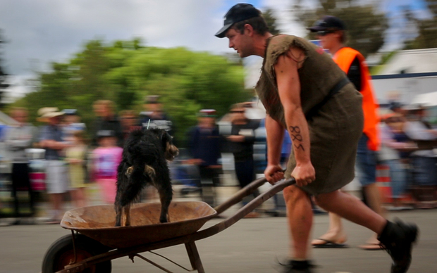 A shepherd and his Huntaway crossing the finish line at the Hunterville Shemozzle.