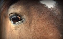 Horses can be frightened by fireworks.