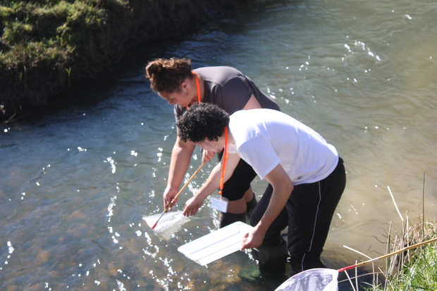 Tolaga Bay area school students taking part in the Uawanui project.
