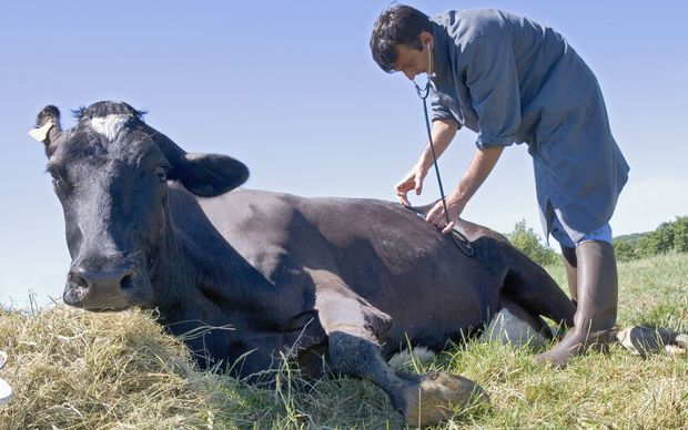 Farmers urged to work with vets over antibiotics | RNZ News
