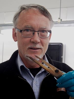 Andrew Stewart holds a daggertooth from the Te Papa fish collection.
