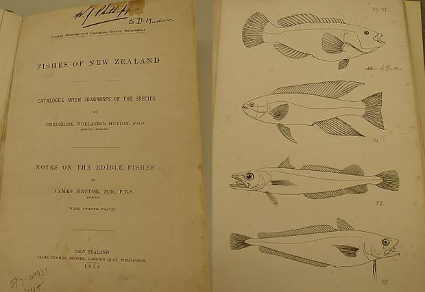 Title page and page of illustrations from the first guide to the fishes of New Zealand, which was published in 1872 by Frederick Hutton and James Hector.