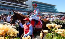 Red Cadeaux with jockey Gerald Mossie after finishing 2nd at the 2013 Melbourne Cup at Flemington Race Course on Tuesday 5th November 2013