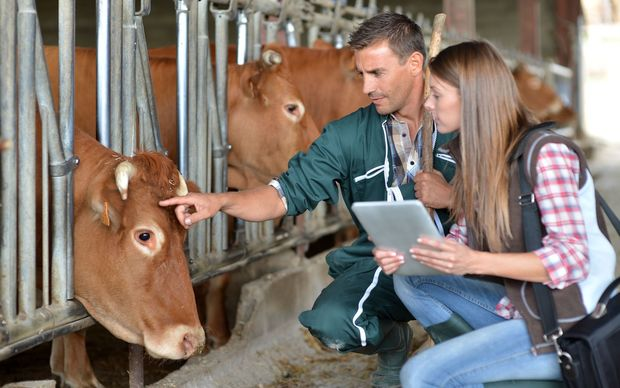 Livestock Antibiotics To Be Replaced With Vaccines By 2030