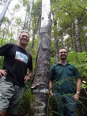 Bruce Burns and George Perry are interested in the ecology and long-term change of New Zealand forests. They are standing next to a kauri tree infected with PTA or kauri dieback.