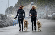 Keen walkers Carey Morrison and Benson the dog (left) and Susie Harris and Ella the dog right (right) getting smashed by the wild spray down Oriental Parade, Wellington.