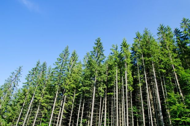 David Rhodes said low carbon prices were a major concern for forest owners.