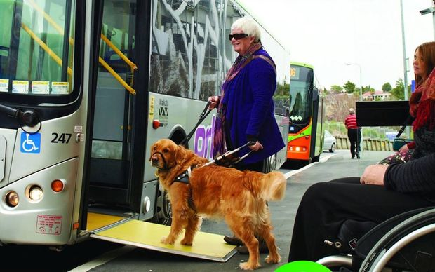 Woman getting on to bus with guide dog