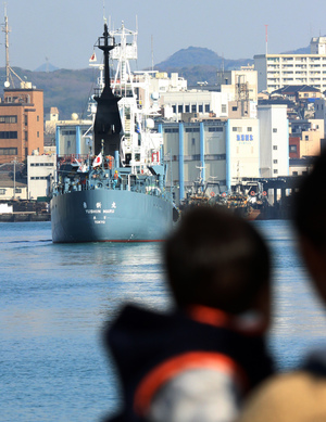 A Japanese whaling ship leaves the port of Shimonoseki in Yamaguchi, western Japan on 1 December 2015 to resume whale hunting in the Antarctic.