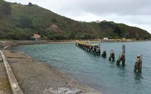 The old wharf at Shelly Bay.