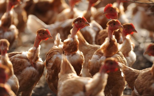 French Polynesia has suspended poultry imports from France after three strains of avian flu were identified in the Landes region.