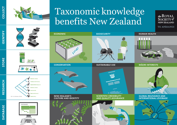 Infographic on the benefits of taxonomy