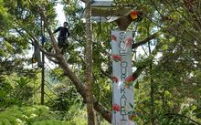 Johno Smith has spent a week in the kauri tree in protest at its possible felling.