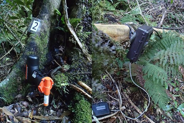 A Goodnature rat trap and a trail camera bolted to trees just above the forest floor
