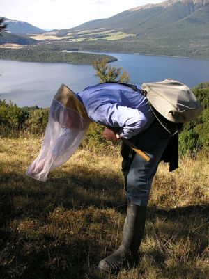 Moth specialist Robert Hoare at Nelson Lakes catching micromoths