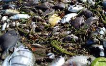Dead fish washed up on Fiji's coral coast due to high water temperatures.