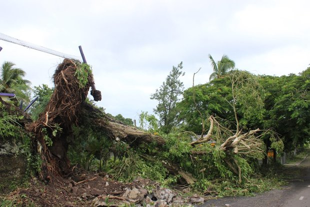 An uprooted tree in Fiji following category 5 Cyclone Winston.