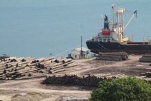 Logs ready for export, Vanimo, Papua New Guinea.