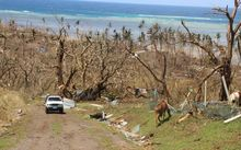 What's left of trees on Koro Island in Fiji after cyclone winston.