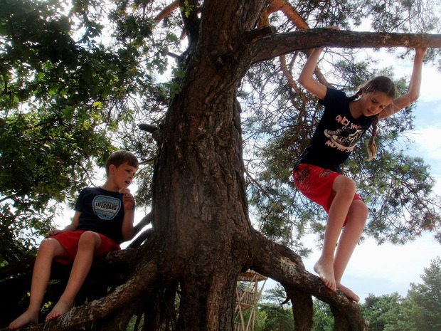 children climbing tree