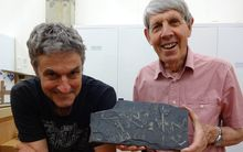 Palaeontologists James Crampton, left, and Roger Cooper with a slab of shale with several graptolites.