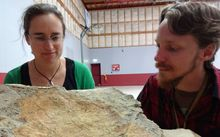 GNS Science palaeobotanist Liz Kennedy and expedition leader Chris Mays, from Monash University, with one of the large, fossil-bearing boulders from the Clarence Valley.