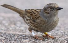 Small brown bird