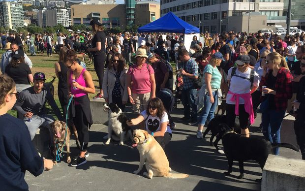 Hundreds of people and dogs turned up to the event in Wellington, with about the same number expected in Auckland.