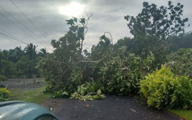 Cyclone Amos brought down trees