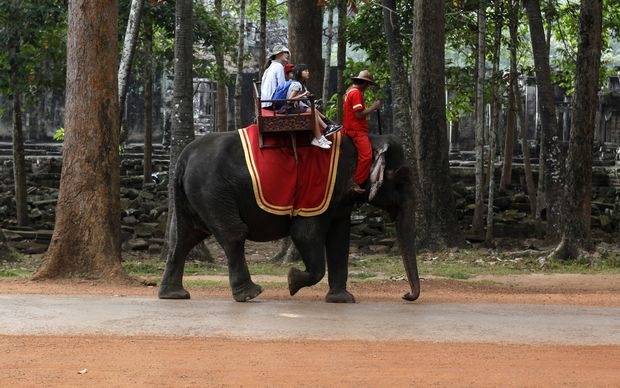 Asian elephants are often used to carry tourists to Cambodia's famous Angkor Wat landmark.