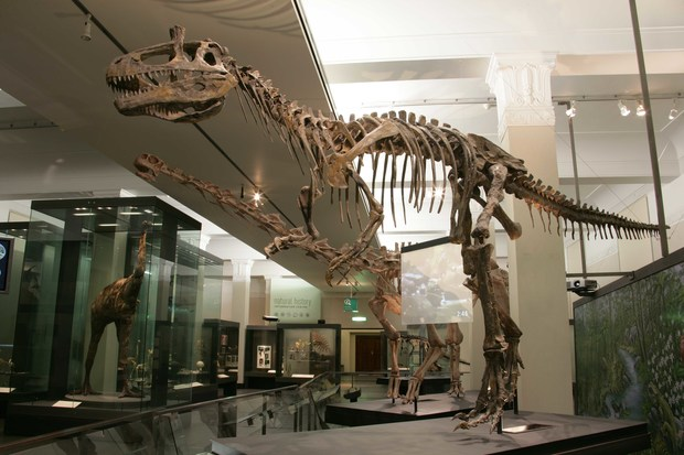The reconstructed skeleton of a Cryolophosaur at Auckland Museum