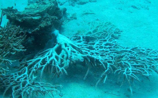 Coral damaged by Cyclone Winston
