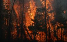 Flames engulf trees along a highway near Fort McMurray, Alberta
