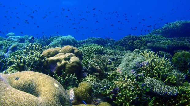 Healthy coral reefs are a vibrant patchwork of colour and texture.