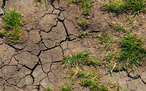 Dry grass, cracked earth, generic
