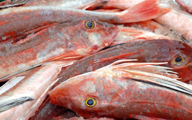 Fish, Gurnard, file photo
