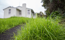 An empty state house with over grown lawns in Glen Innes that has been empty for 3 months