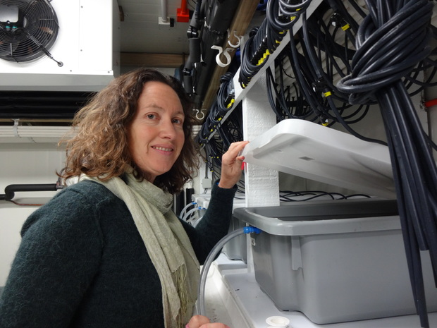 Marine ecologist Vonda Cummings studies how paua adapt to different levels of acidity and whether more acidic waters affect the survival chances of their larvae.
