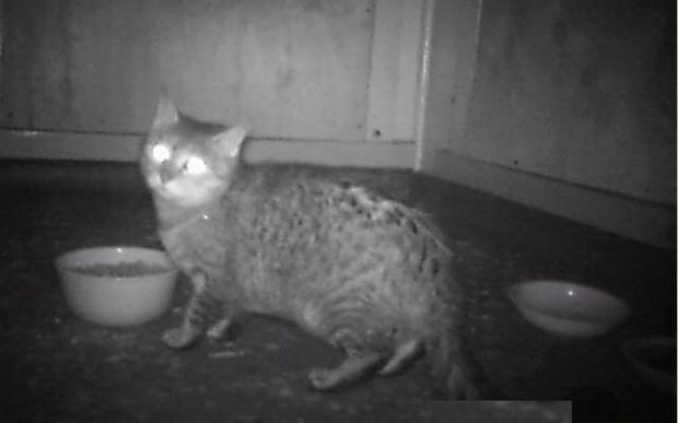 One of the cats caught on camera.