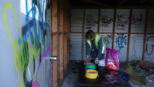 Jane Newman putting out cat food in a feeding station in Christchurch's red zone.