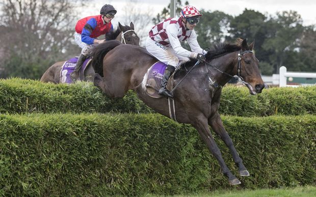 Amanood Lad ridden by Craig Thornton leads the field before going on to win in the 2014 Great Northern Steeplechase.