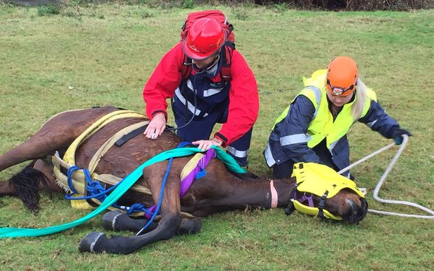 The two year old horse named Poppy was stranded down a steep bank alongside rapidly rising flood water in Otaki george yesterday.