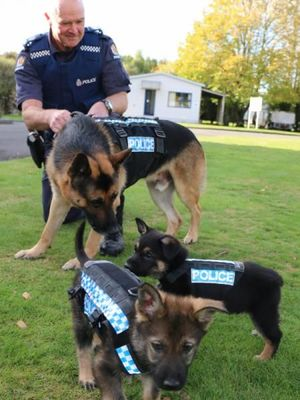 Guide Dogs Nz Training