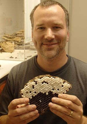 Bob Brown holding part of a wasp nest
