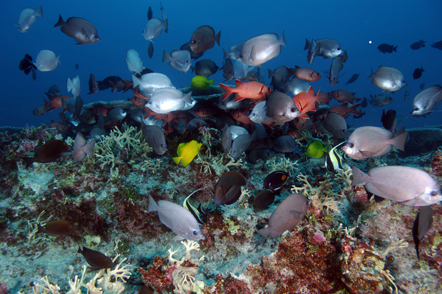 Concerns over whether USA can manage huge fishing protected zone