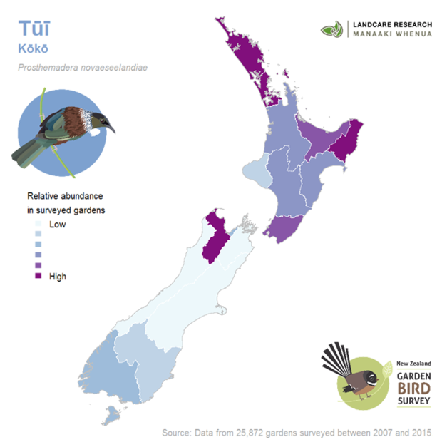 The garden bird survey team has produced maps and fact sheets for 15 different garden birds - this one shows the abundance of tui.