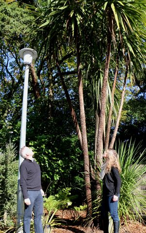 Craig McGill and Jessica Schnell contemplate a cabbage tree